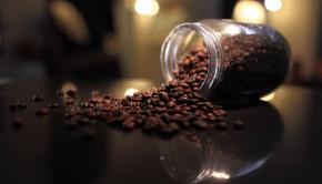 Friske kaffebønder